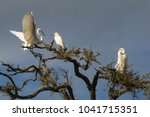 the great egret in breeding... | Shutterstock . vector #1041715351