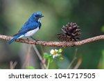 beautiful blue bird  male of... | Shutterstock . vector #1041717505
