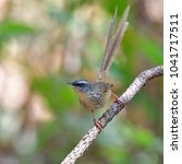 beautiful colorful bird  hill... | Shutterstock . vector #1041717511