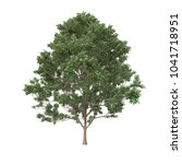 tree isolated on white... | Shutterstock . vector #1041718951
