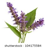 Fresh Peppermint Herb And...