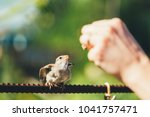 Feeding Of Young Chick  Bird...
