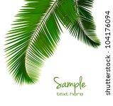 palm leaves on white background.... | Shutterstock .eps vector #104176094