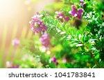 beautiful blooming violet wild... | Shutterstock . vector #1041783841