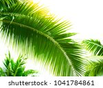 detail of coconut trees with... | Shutterstock . vector #1041784861