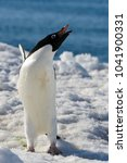 Small photo of Adelie penguin on snow