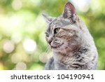 Stock photo portrait of a striped cat outdoor 104190941
