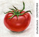 pencil illustration with tomato | Shutterstock . vector #1041909484