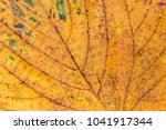 Small photo of Linden yellow leaf macro