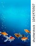 Group Of Aquarium Fish Swimmin...