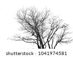 branches on a white background. | Shutterstock . vector #1041974581