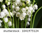 Lily Of The Valley Flowers...