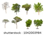 Isolated Tree Collection White Backdrop - Fine Art prints