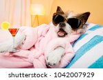 cool funny  poodle dog resting... | Shutterstock . vector #1042007929