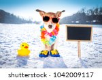 cool funny freezing icy dog in... | Shutterstock . vector #1042009117