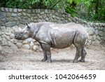 adult rhino stays near the wall ... | Shutterstock . vector #1042064659