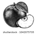 engrave isolated apple hand... | Shutterstock . vector #1042075735