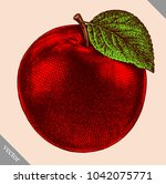 engrave isolated apple hand... | Shutterstock .eps vector #1042075771