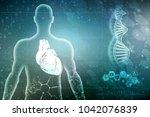 3d illustration  anatomy of... | Shutterstock . vector #1042076839