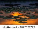 close up lotus leaves in the... | Shutterstock . vector #1042091779