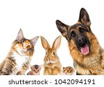 Stock photo group of animals looking on a white background isolated 1042094191