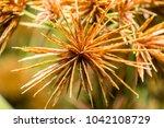 soft focus and blurred grass...   Shutterstock . vector #1042108729