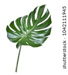 monstera leave texture tropical ... | Shutterstock . vector #1042111945