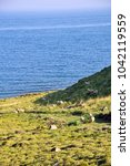Small photo of Sheep grazing in green hill in an Aegean Island
