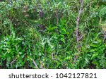 green leaf background in the... | Shutterstock . vector #1042127821