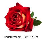 Red Rose Isolated On White...