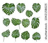 set of monstera leave texture... | Shutterstock . vector #1042158025