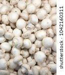 champignon harvest. white... | Shutterstock . vector #1042160311