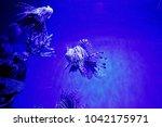 zebrafish   firefish  tastyfish ... | Shutterstock . vector #1042175971