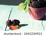 blackberries in a bowl | Shutterstock . vector #1042234921