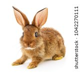 Stock photo small brown rabbit isolated on white background 1042270111