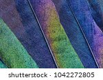 close up of iridescent feathers ... | Shutterstock . vector #1042272805