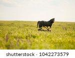 portrait of a wild horse | Shutterstock . vector #1042273579