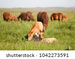 horse foal on pasture. a herd... | Shutterstock . vector #1042273591
