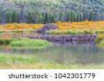 the north american beaver or...   Shutterstock . vector #1042301779