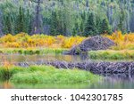 the north american beaver or... | Shutterstock . vector #1042301785
