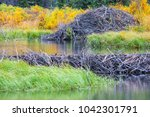 the north american beaver or...   Shutterstock . vector #1042301791