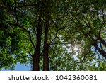 the silhouette of tree stands... | Shutterstock . vector #1042360081