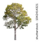 collection of isolated trees on ...   Shutterstock . vector #1042414321