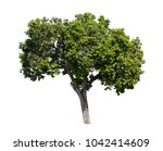 collection of isolated trees on ...   Shutterstock . vector #1042414609