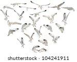 european herring gulls  larus... | Shutterstock . vector #104241911
