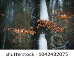 forest and nature near lake... | Shutterstock . vector #1042432075