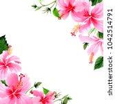 wildflower hibiscus pink flower ... | Shutterstock . vector #1042514791