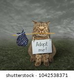 "Small photo of The loneliness cat with a sign around his neck is on a meadow. It says "" Adopt me! ""."