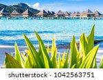 bora bora island  french... | Shutterstock . vector #1042563751