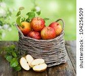 Harvest Time  Apples